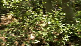Guatemala - Beaded Lizard