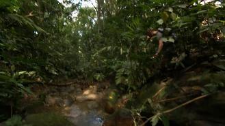 Venezuela - Scolopendra