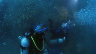 Cairns, Australia - Box Jellyfish