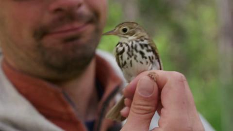 Episode One – Lesser Slave Lake Bird Observatory & Boreal Centre for Bird Conservation