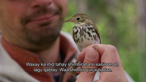 Episode One – Lesser Slave Lake Bird Observatory & Boreal Centre for Bird Conservation (Tagalog)