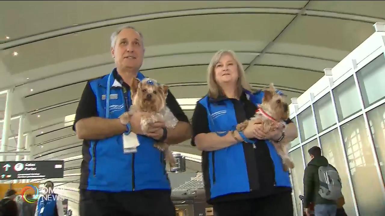多倫多機場增添13隻親善治療犬 — Feb 21, 2019 (ON)