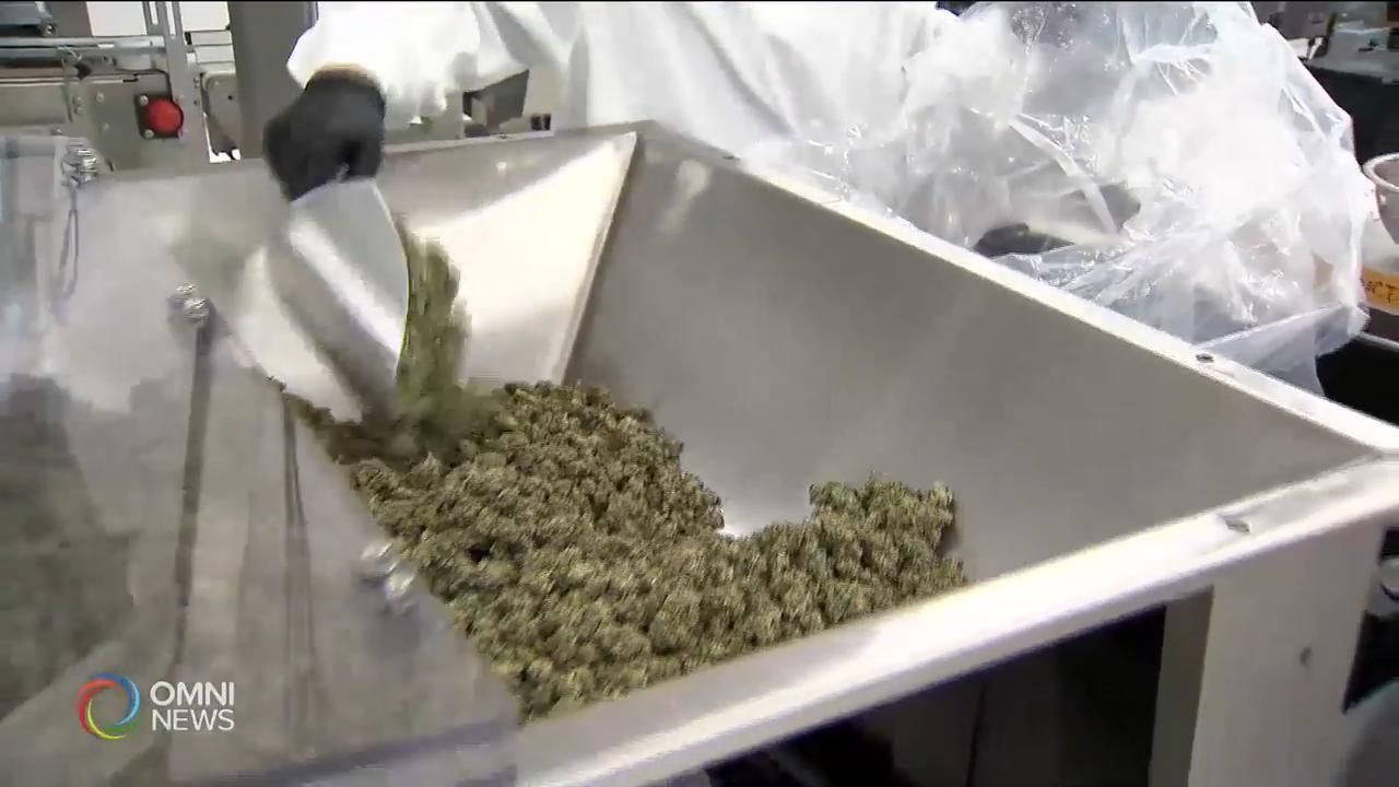 大麻生產需時短期內供不應求 — Apr 18, 2019 (ON)