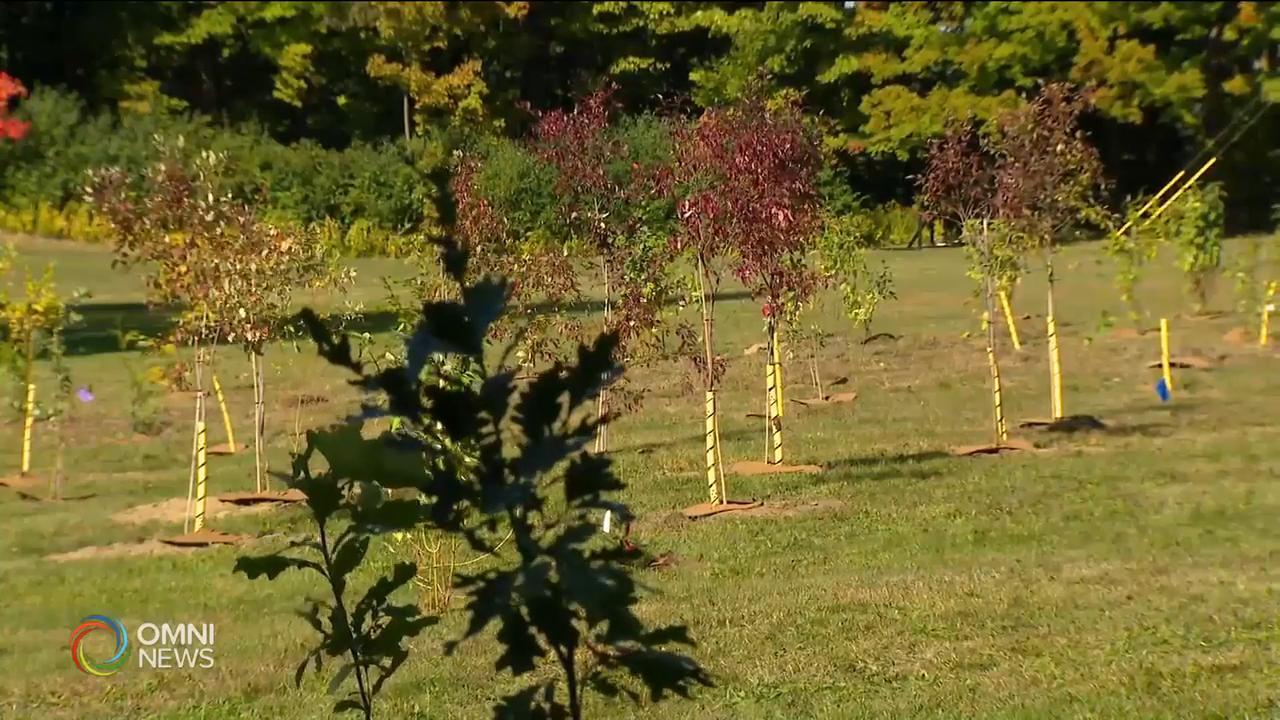 環保組織在植樹節於新寧醫院種樹 — Sep 23, 2020 (ON)